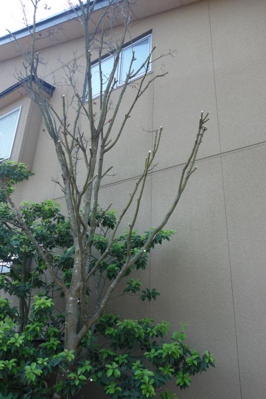 f:id:muramoto-wagashi:20170523075320j:image