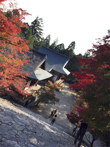 f:id:murasakiimokyabetu:20191111210230j:image