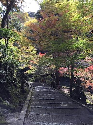 f:id:murasakiimokyabetu:20191111210243j:image