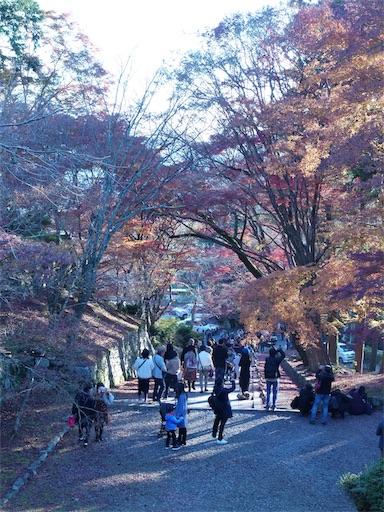 f:id:murasakiimokyabetu:20191203221237j:image