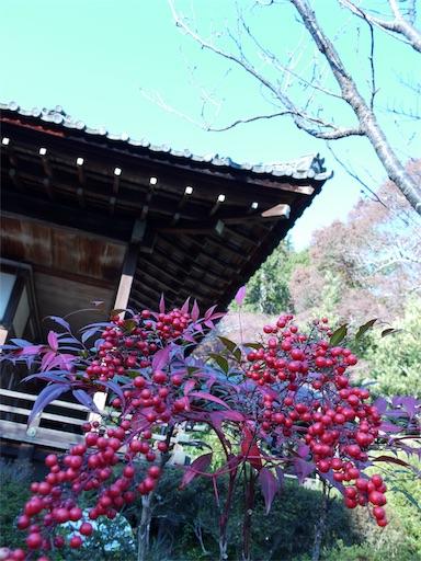 f:id:murasakiimokyabetu:20191203222220j:image