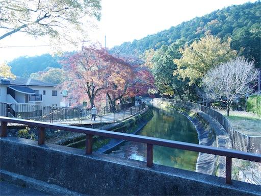 f:id:murasakiimokyabetu:20191203222912j:image