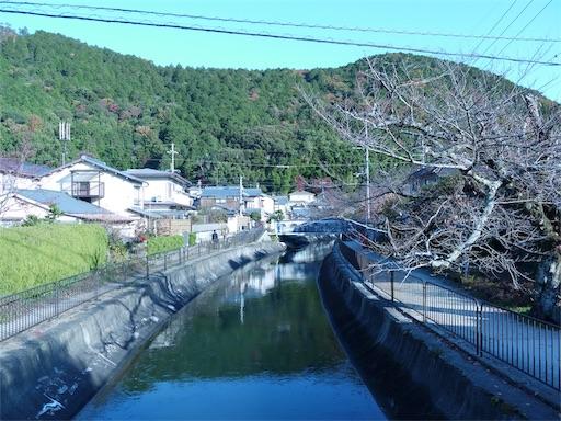 f:id:murasakiimokyabetu:20191203222920j:image