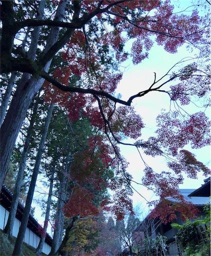 f:id:murasakiimokyabetu:20191204222310j:image