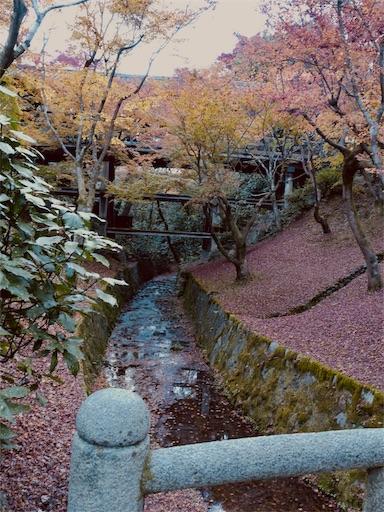 f:id:murasakiimokyabetu:20191204223409j:image