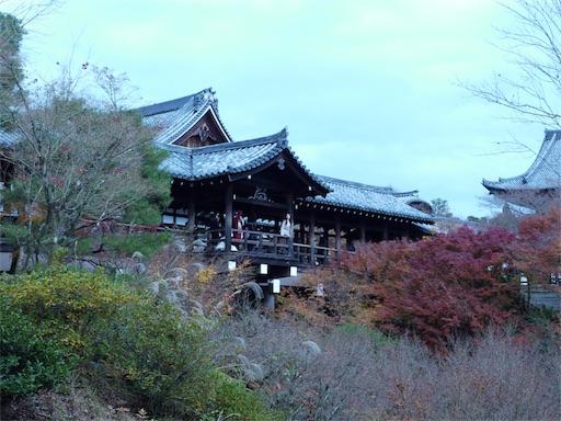 f:id:murasakiimokyabetu:20191204224330j:image