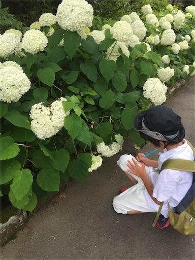 f:id:murasakikanasya:20160802130141j:image