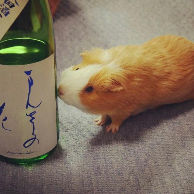 f:id:murasakiyukari:20160513170325j:image