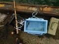 釣行 釣基地外 蛸釣りに参上