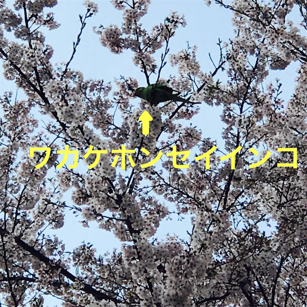 f:id:murasana:20170413103738j:image