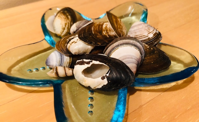 貝殻 使い方 飾り