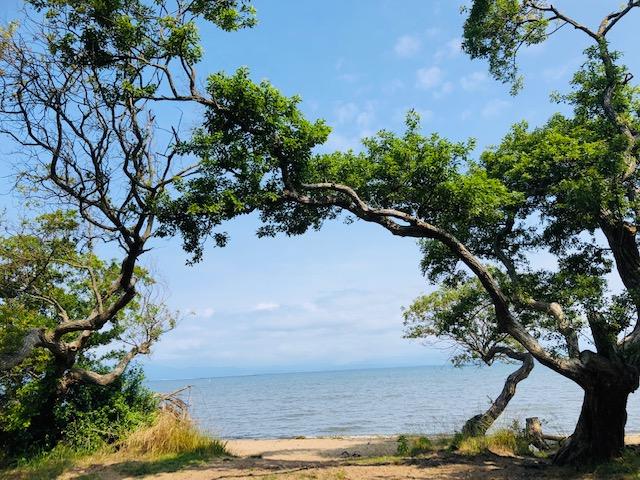 琵琶湖 バーベキュー キャンプ