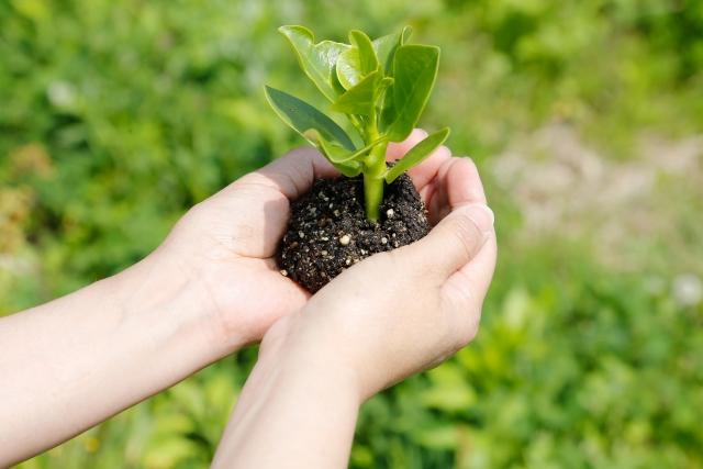 植物 美しい 全体 元気