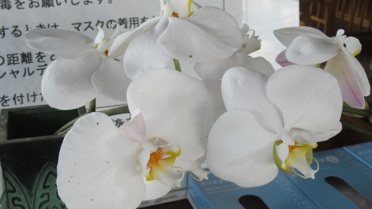 f:id:murayama147:20210725194102j:plain