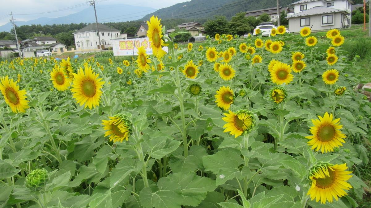 f:id:murayama147:20210726192554j:plain