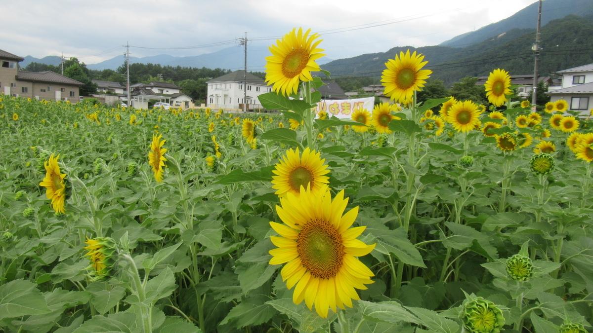 f:id:murayama147:20210726192605j:plain