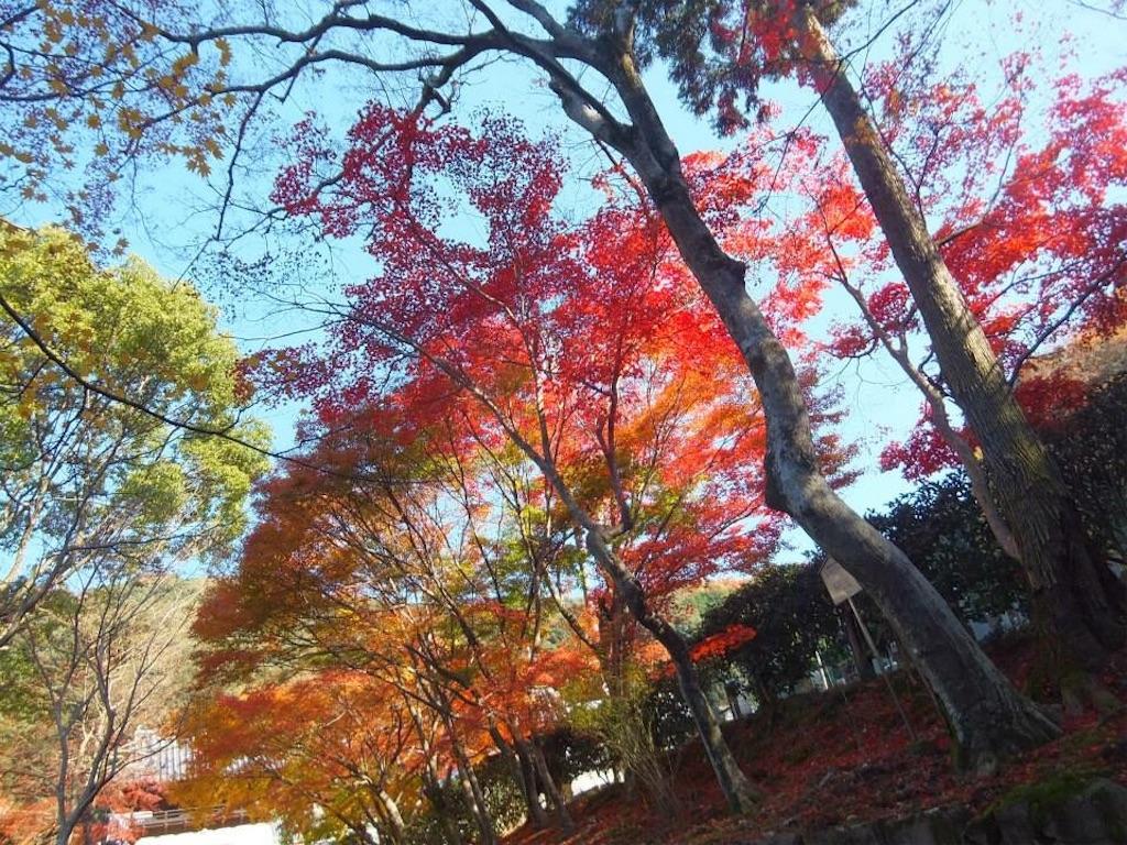 f:id:murayu24:20171204193237j:image