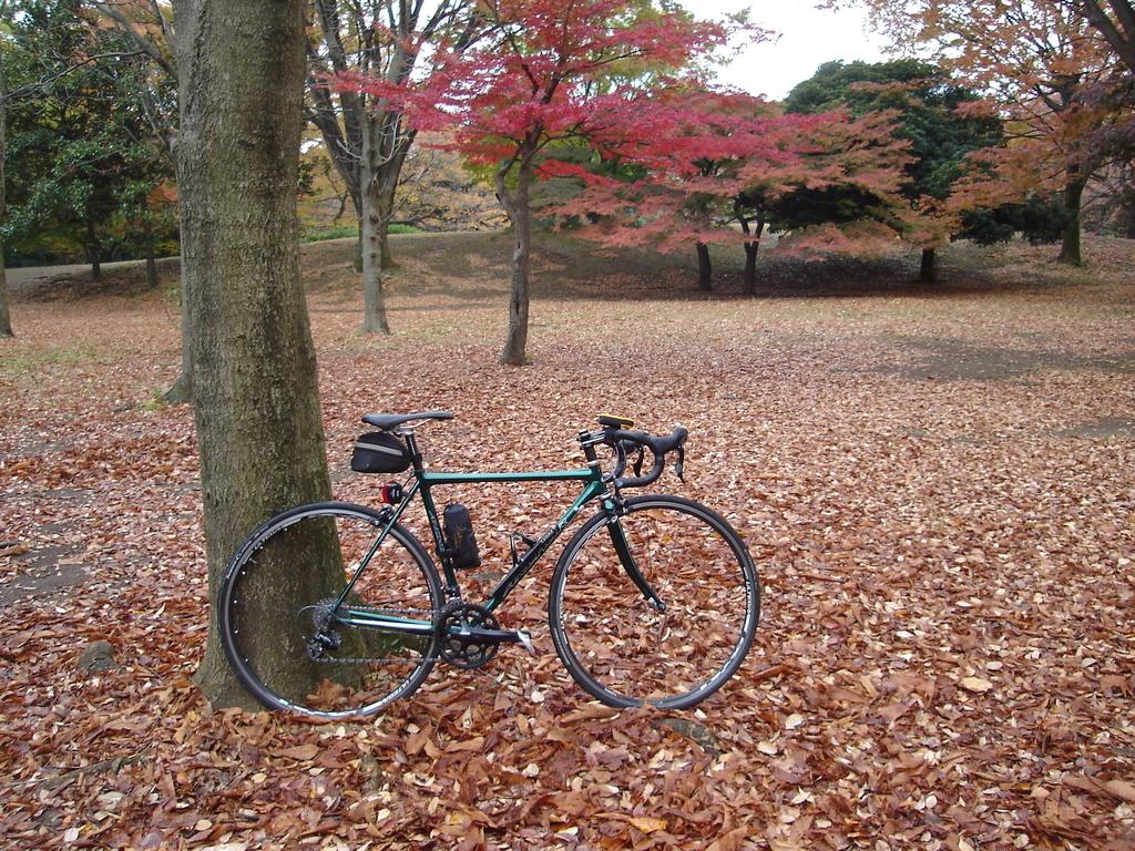 荒川サイクリングロード 紅葉