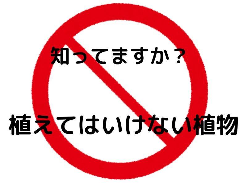 f:id:muryoari:20191204230822j:plain