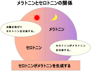 f:id:musclesamuraiK:20171229010337j:プレーン