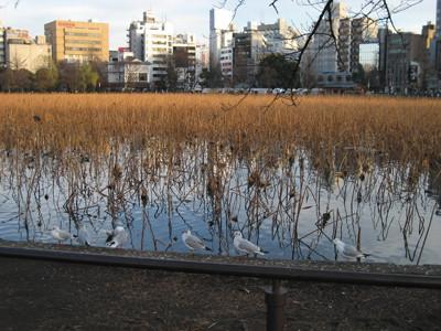 f:id:museion:20070104164519j:image