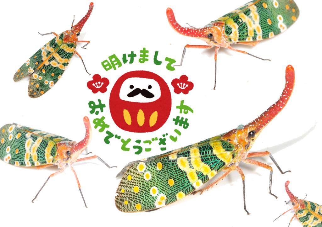 f:id:mushikurotowa:20180103182618j:plain