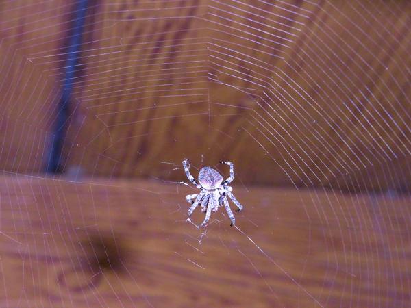 クモが好き クモの巣・クモの網...