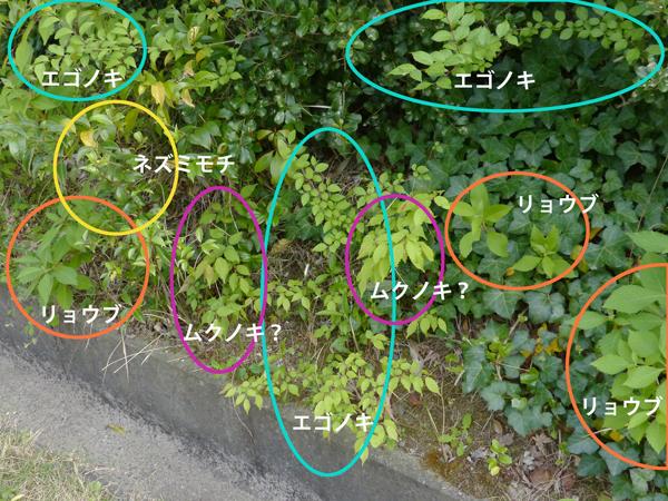 f:id:mushitomo:20170510000049j:plain