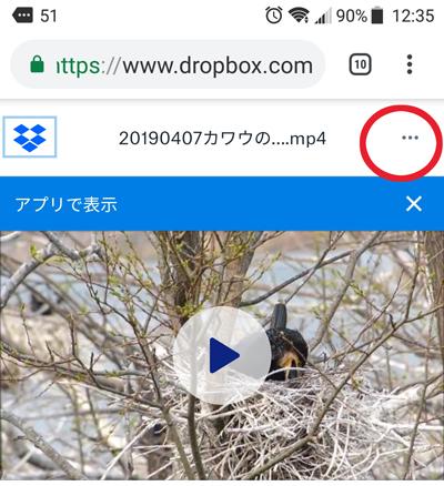 f:id:mushitomo:20190503134202j:plain