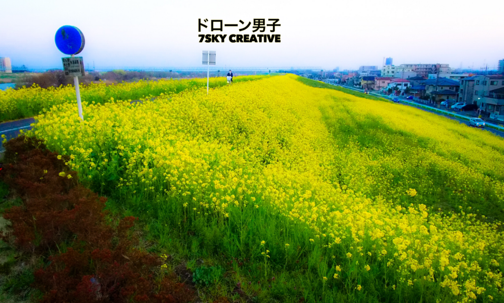 f:id:music-satokibi:20180323204120p:plain