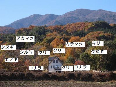 f:id:musikusanouen:20101119233152j:image