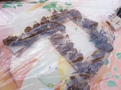 f:id:musikusanouen:20110912011913j:image:w360