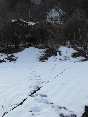 f:id:musikusanouen:20120126003943j:image