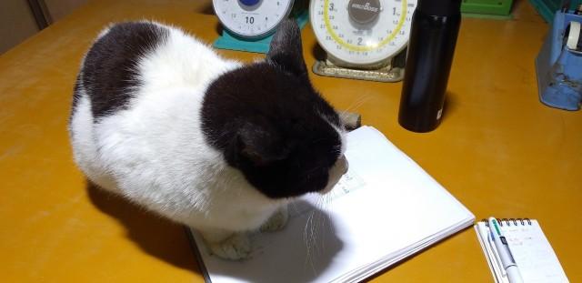 f:id:musyokunofutari:20210530185229j:image