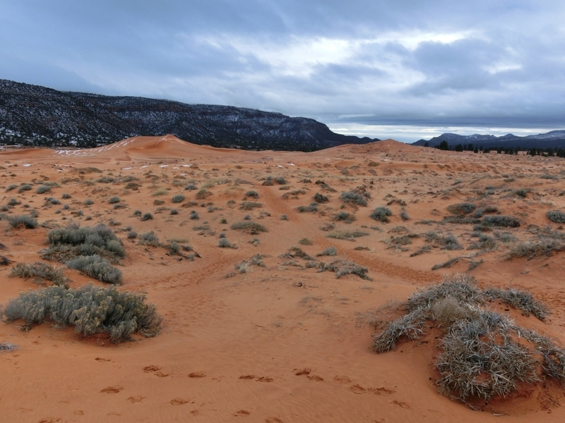 coral_pink_sand_dunes_pic3