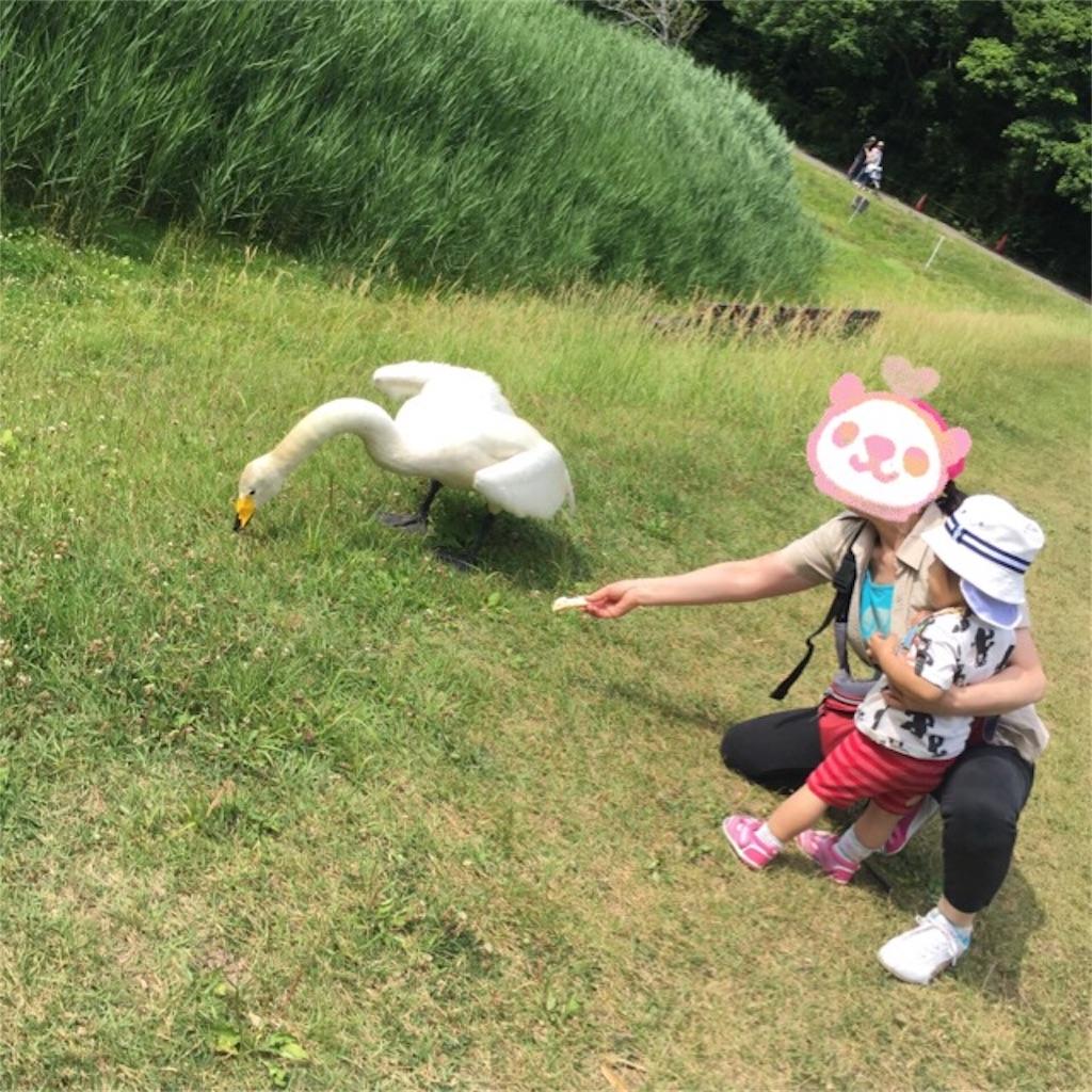f:id:mutsuki001:20170617212120j:image
