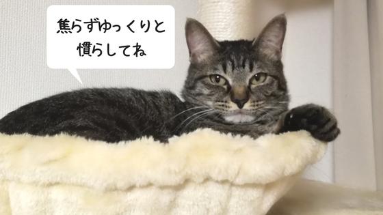 f:id:mutsukitorako:20180715101749j:plain