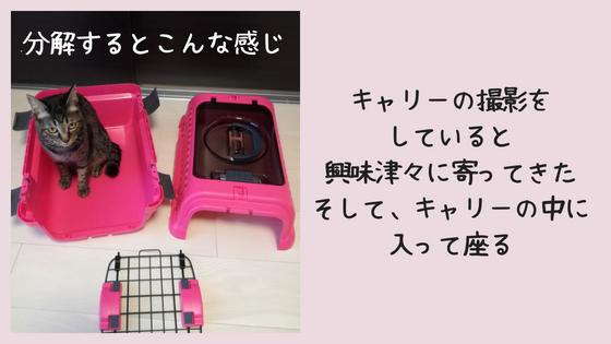 f:id:mutsukitorako:20180716173916j:plain
