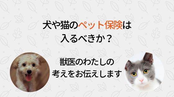 犬や猫のペット保険は入るべきか?獣医のわたしの考えをお伝えします
