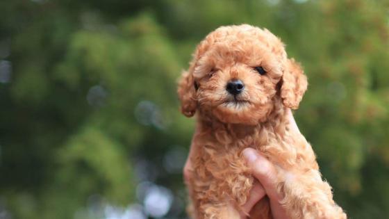 小型犬はペット保険を考えてみる