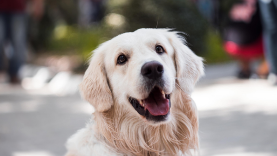 治療費が高くなる大型犬もペット保険を要検討