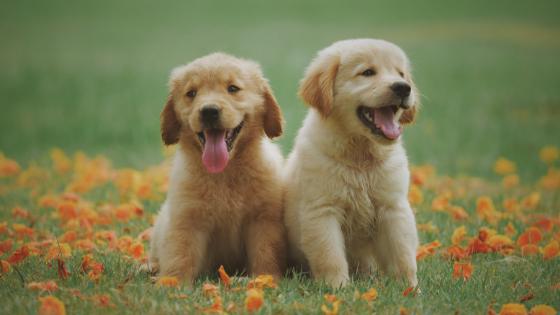 ペット保険の注意点