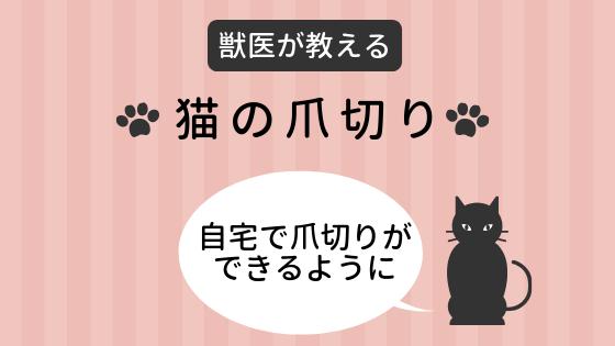 【獣医が教える】猫の爪切りの方法~自宅で爪切りができるように~