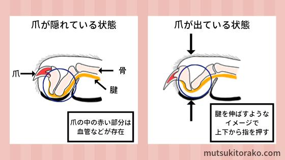 猫の爪の構造と爪の出し入れの仕組み