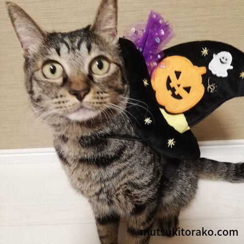 ハロウィンの帽子と猫