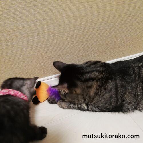 コロコロねずみカボチャで遊ぶ猫たち