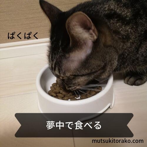 ニュートロナチュラルチョイス避妊・去勢猫用も食べてくれた