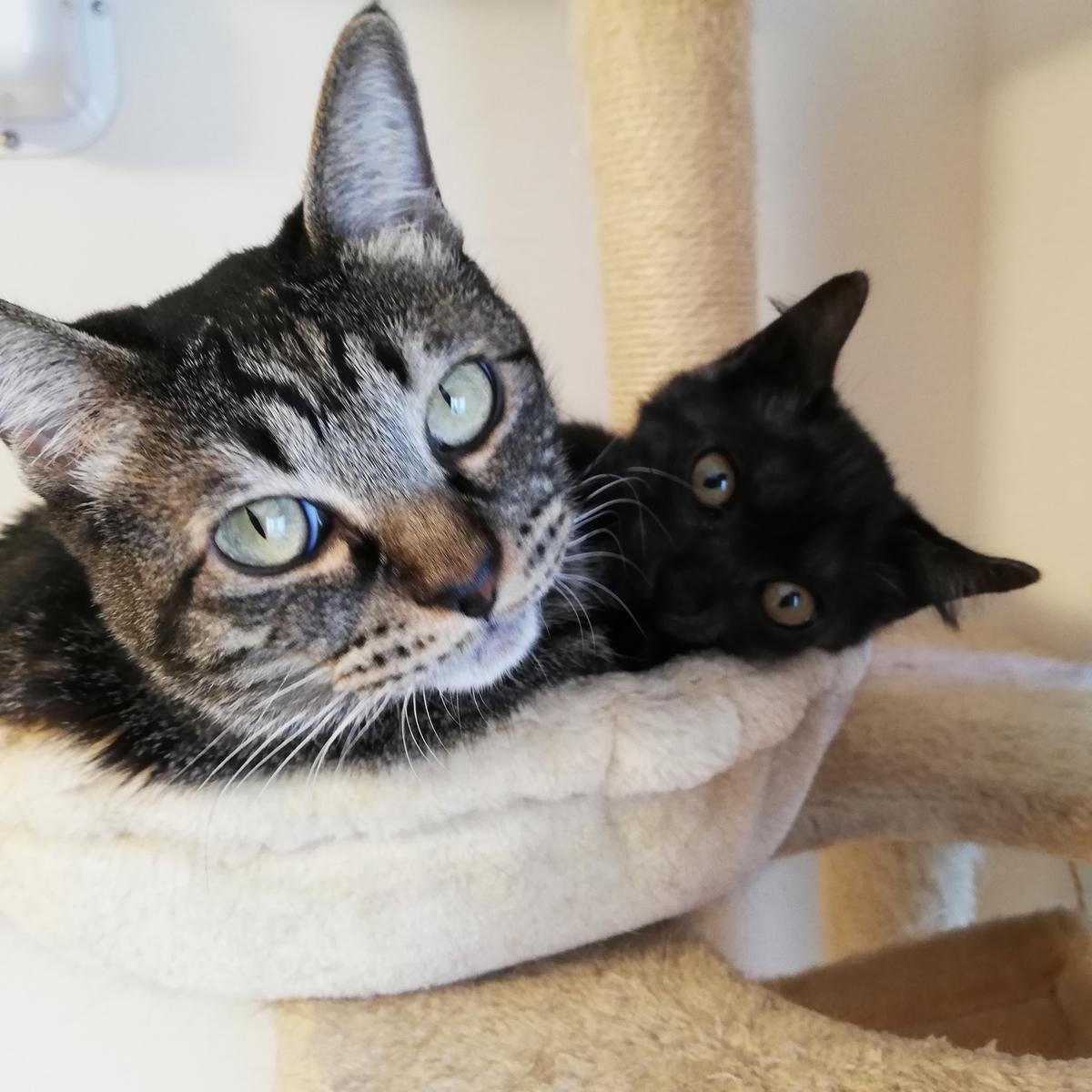 2匹の猫ブログ