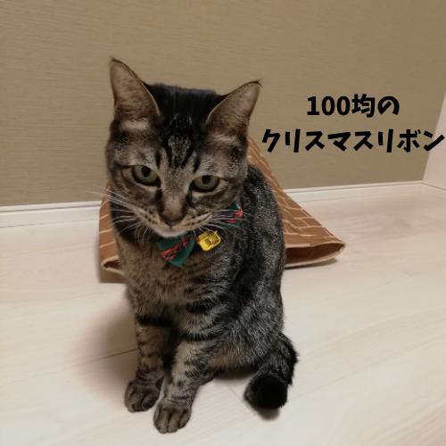 f:id:mutsukitorako:20191214190510p:plain