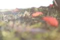 京都新聞写真コンテスト 陽だまり